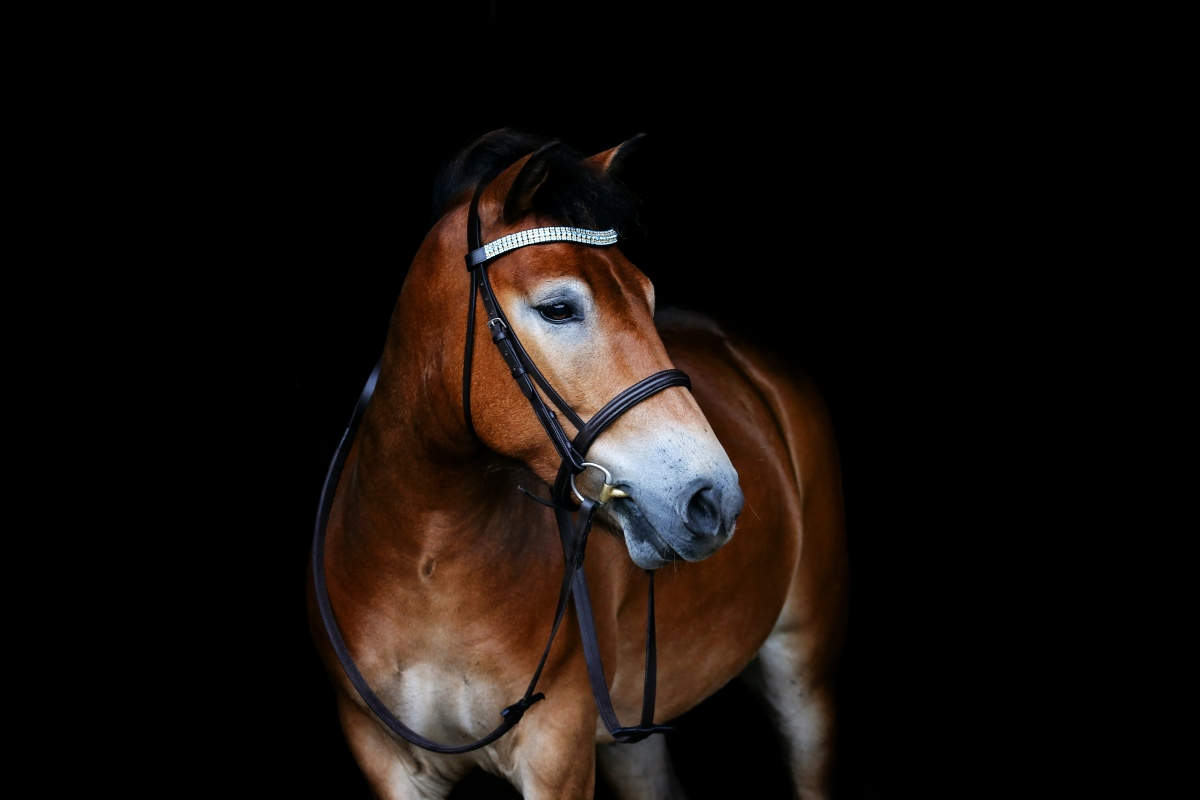 "The adorable Clegg modelling his Blue Zircon, Opal and Blue Zircon curved 3/4"" Preciosa Crystal browband"